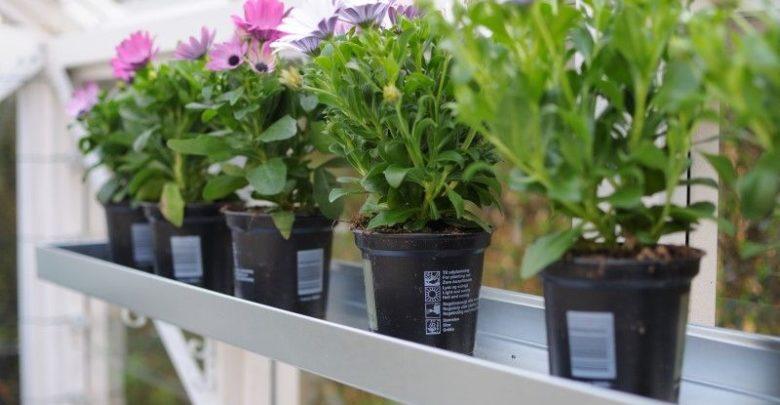Photo of Flotte Højbede til den nye have derhjemme