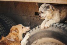 Photo of Når dyr kan leve side om side